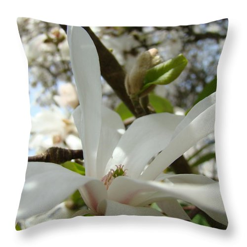 Magnolia Throw Pillow featuring the photograph Office Art Prints White Magnolia Flower 6 Giclee Prints Baslee Troutman by Baslee Troutman