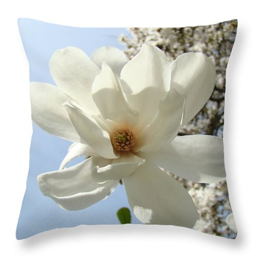 Magnolia Throw Pillow featuring the photograph Office Art Prints White Magnolia Flower 66 Blue Sky Giclee Prints Baslee Troutman by Baslee Troutman