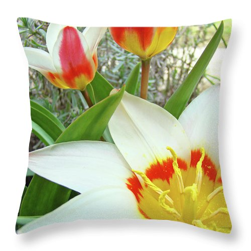 Tulip Throw Pillow featuring the photograph Office Art Tulips Tulip Flowers Giclee Art Prints Florals Baslee Troutman by Baslee Troutman