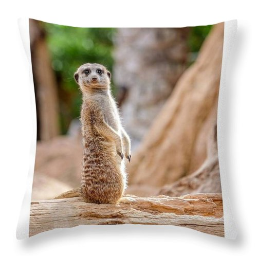 Cute Throw Pillow featuring the photograph Oh...hello! How Are You Doing?  #fuji by Marcelo Valente