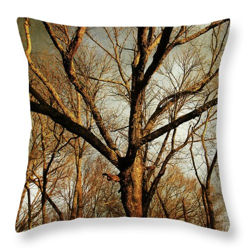 Tree Throw Pillow featuring the photograph Old Faithful by Amy Tyler