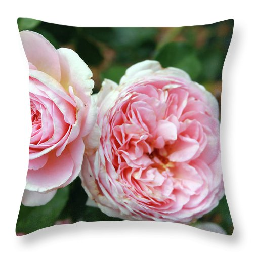 Flowers Throw Pillow featuring the photograph Old Fashioned Rose by Mary Haber
