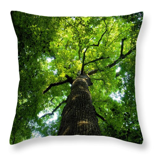 Old Growth Forest Throw Pillow featuring the painting Old Growth by David Lee Thompson