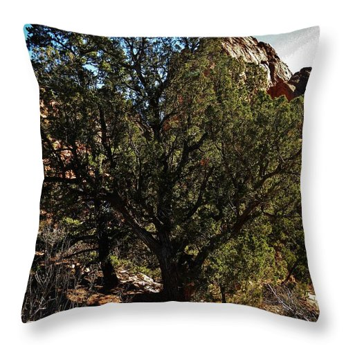 Colorado Throw Pillow featuring the photograph Old Juniper by CL Redding