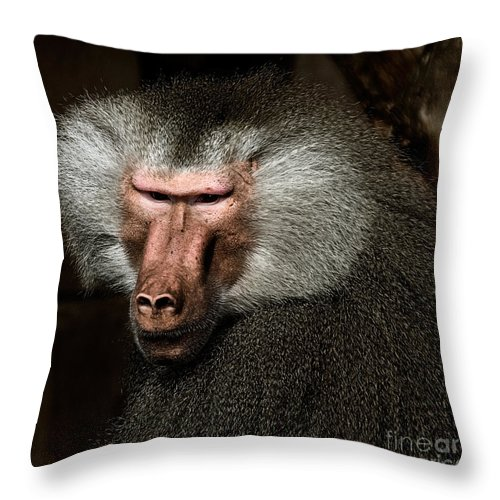 Affen Throw Pillow featuring the photograph Old Male by Joerg Lingnau