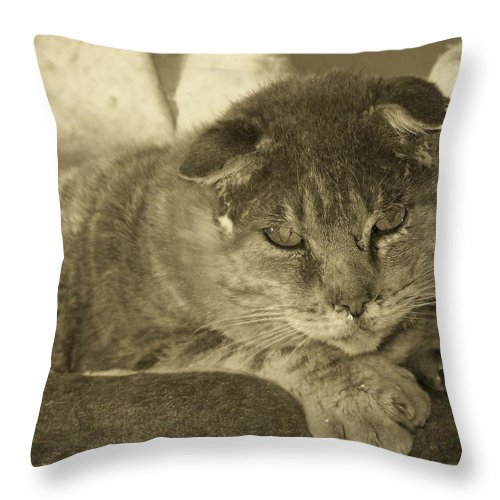 Cats Throw Pillow featuring the photograph Old Man Old Beauty Thumbody by Deborah Montana
