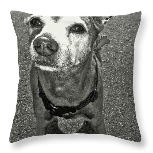 Dog Throw Pillow featuring the photograph Old Timer by JAMART Photography