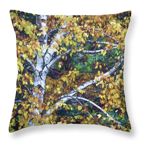 Birch Tree Throw Pillow featuring the photograph Old Yellow Birch by Diane Moore