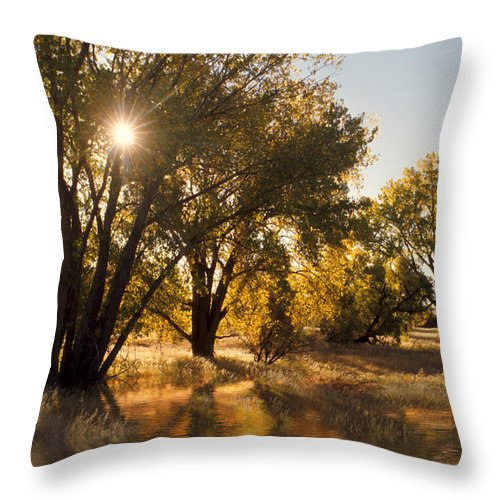 Ftrees Throw Pillow featuring the photograph Oliver Sunbursts by Jerry McElroy