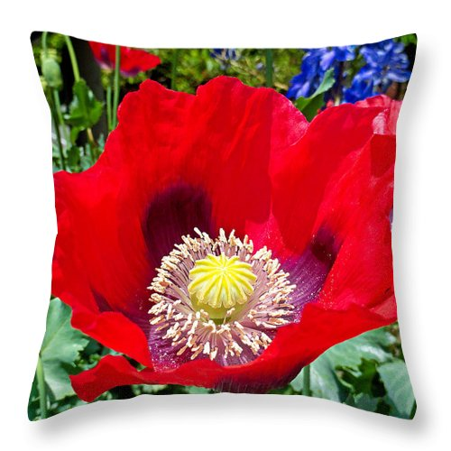 Olympia Throw Pillow featuring the photograph Olympia Poppy by Robert Meyers-Lussier