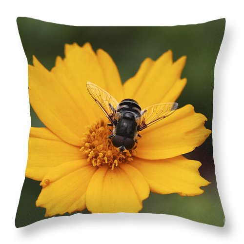 Macro Throw Pillow featuring the photograph On A Buttery Cloud by Deborah Benoit