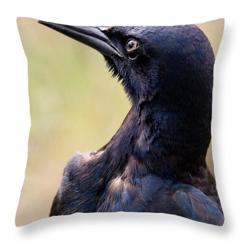 Bird Throw Pillow featuring the photograph On Alert by Christopher Holmes