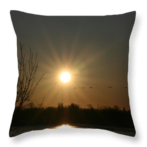 Geese Water Lake Ice Trees Nature Sunrise Sun Cold Morning Ducks Birds Throw Pillow featuring the photograph On Frozen Pond by Andrea Lawrence