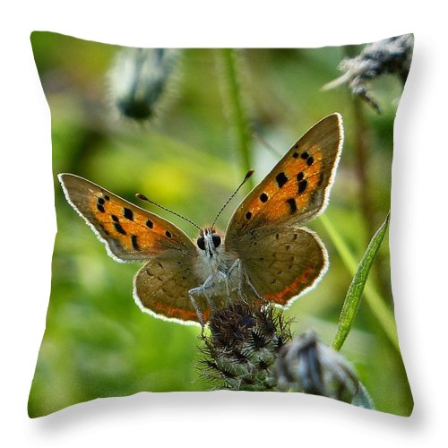 Small Copper Throw Pillow featuring the photograph On The Beat by David Curtis