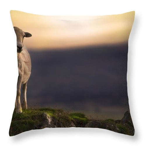 Sheep Throw Pillow featuring the photograph On The Top Of The Hill by Angel Ciesniarska