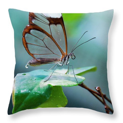 Butterfly Throw Pillow featuring the photograph On Top Of The World by Jorn Van Hezik