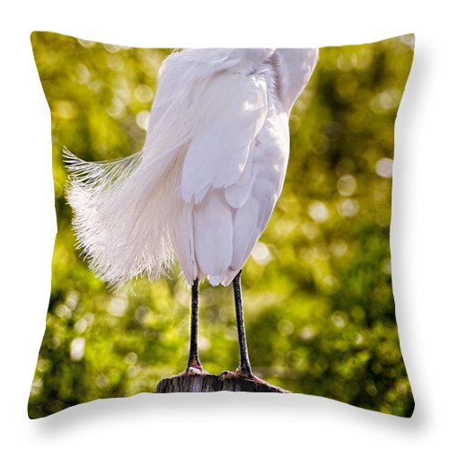 snowy Egret Throw Pillow featuring the photograph On Watch by Christopher Holmes