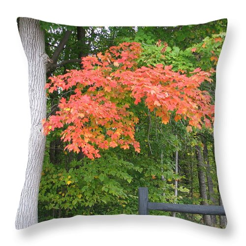 Fall Throw Pillow featuring the photograph Onaway by Kelly Mezzapelle