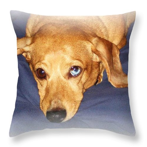Dachshund Throw Pillow featuring the photograph One Blue Eye by Nelson Strong