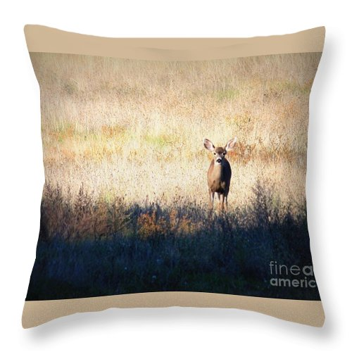 Wildlife Throw Pillow featuring the photograph One Cute Deer by Carol Groenen