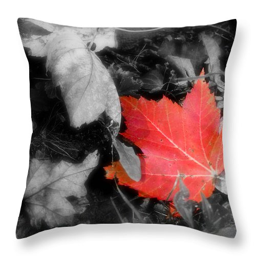 Leaf Throw Pillow featuring the photograph One Of A Kind by Kenneth Krolikowski