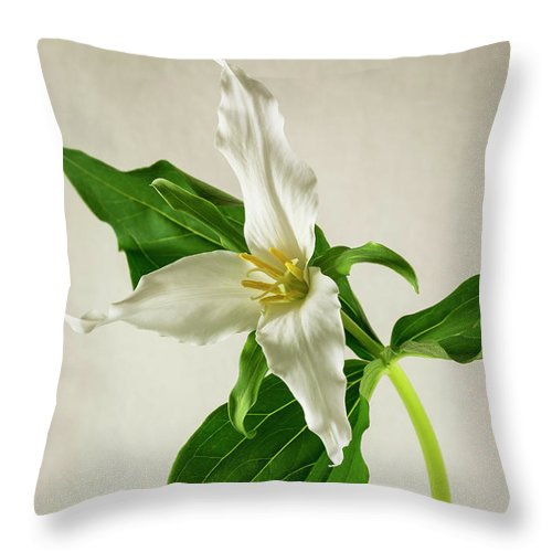 Spring Throw Pillow featuring the photograph One Trillium by Masako Metz