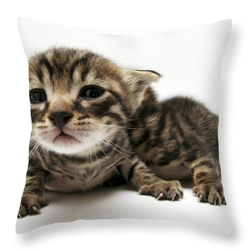 Cat Throw Pillow featuring the photograph One Week Old Kittens by Yedidya yos mizrachi