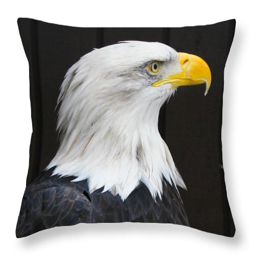Bald Eagle Throw Pillow featuring the photograph One Wing Short by Sheryl Mayhew