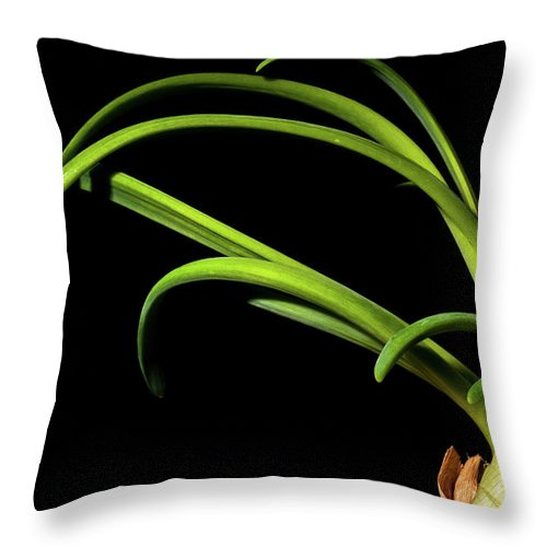 Onion Greens Throw Pillow featuring the photograph Onion Greens by Onyonet Photo Studios
