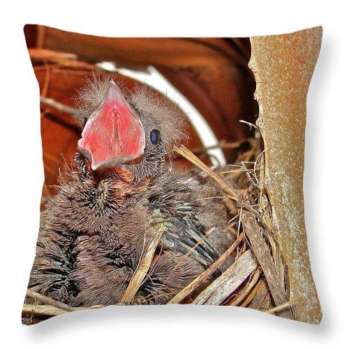 Bird Throw Pillow featuring the photograph Open Wide by Diana Hatcher
