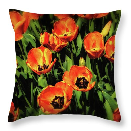 Tulip Throw Pillow featuring the photograph Open Wide - Tulips On Display by Tom Mc Nemar