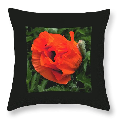 Opium Poppy Throw Pillow featuring the photograph Opium by Heather Lennox