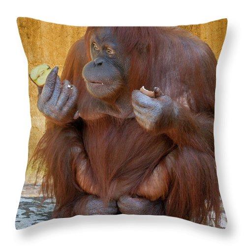 Orang Untang Throw Pillow featuring the photograph Orang Utang Eating by Heiko Koehrer-Wagner