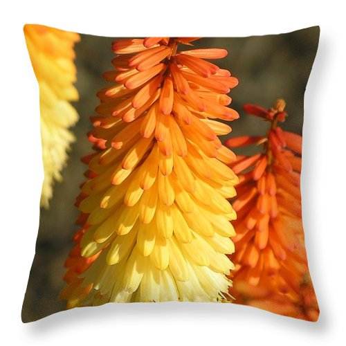 Orange Throw Pillow featuring the photograph Orange And Gold Flower by Diane Greco-Lesser