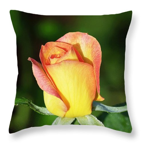 Rose Throw Pillow featuring the photograph Orange And Yellow Rose by Kenneth Albin