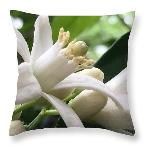 Flowers Throw Pillow featuring the photograph Orange Blossoms #1 by Denise DuFresne