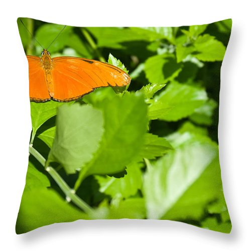 Orange Throw Pillow featuring the photograph Orange Butterfly On Foliage by Douglas Barnett