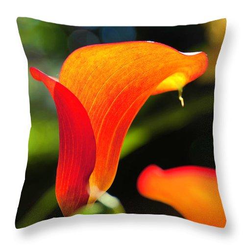 Balboa Park Throw Pillow featuring the photograph Orange Calla Lily by Christianna Pierce