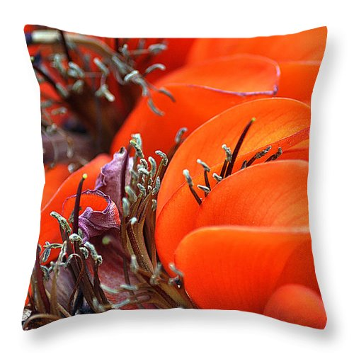 Clay Throw Pillow featuring the photograph Orange by Clayton Bruster