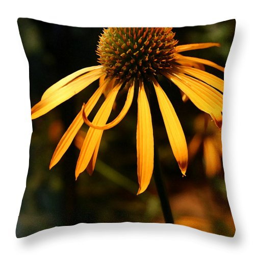 Flower Throw Pillow featuring the photograph Orange Coneflower by Mary Haber