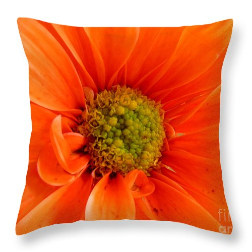 Nature Throw Pillow featuring the photograph Orange Daisy - A Center View by Lucyna A M Green