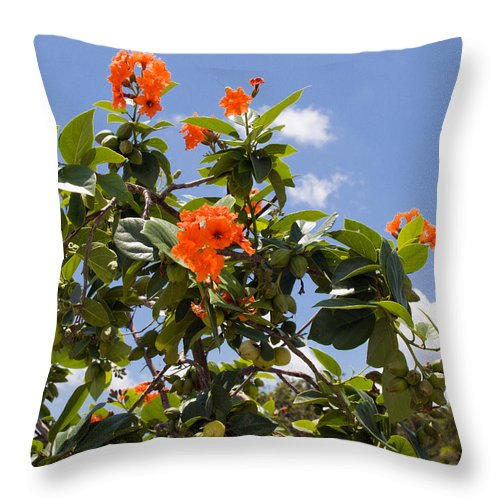 Hibiscus; Rosasinensis; Rosa; Sinensis; Rosa-sinensis; Tree; Bush; Shrub; Plant; Flower; Flowers; Fl Throw Pillow featuring the photograph Orange Hibiscus With Fruit On The Indian River In Florida by Allan Hughes