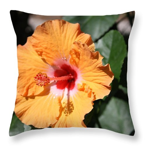 Flowers Throw Pillow featuring the photograph Orange Hybiscus by Nancy Chenet
