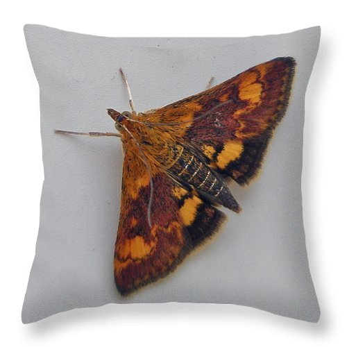 Moth Throw Pillow featuring the photograph Orange Mint Moth - Pyrausta Orphisalis by Mother Nature