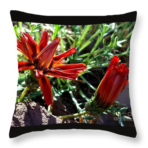 Gazania Throw Pillow featuring the photograph Orange Power by Kathy McClure