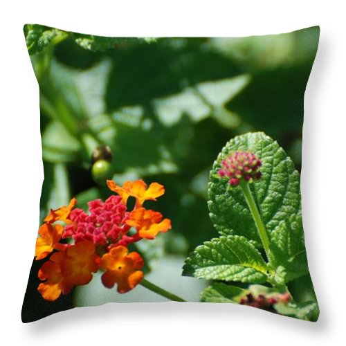 Orange Throw Pillow featuring the photograph Orange Red Flowers by Rob Hans