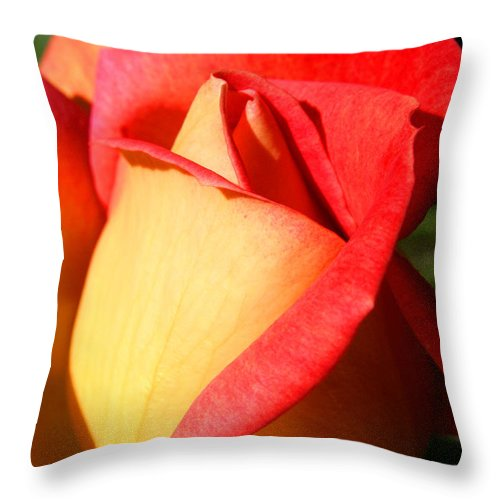 Orange Rosebud Throw Pillow featuring the photograph Orange Rosebud by Ralph A Ledergerber-Photography