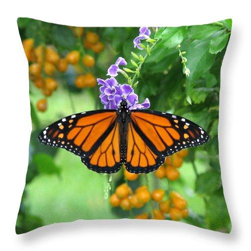 Monarch Throw Pillow featuring the photograph Orange Splendour by Peg Urban
