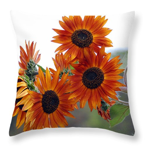 Sunflower Throw Pillow featuring the photograph Orange Sunflower 1 by Amy Fose
