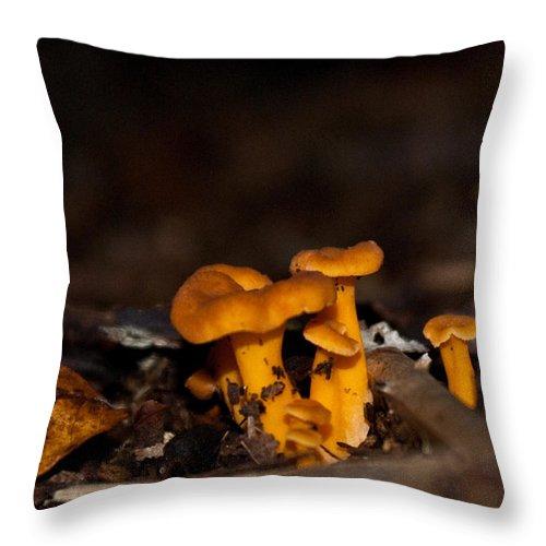 Mushroom Throw Pillow featuring the photograph Orange Woodland Mushrooms by Douglas Barnett